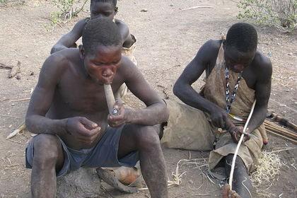 Африканские любители меда эксплуатируют птиц. видео