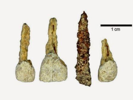 Археологи нашли вставной зуб которому 2300 лет