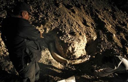 Археологи в словакии обнаружили стоянку охотников на мамонтов