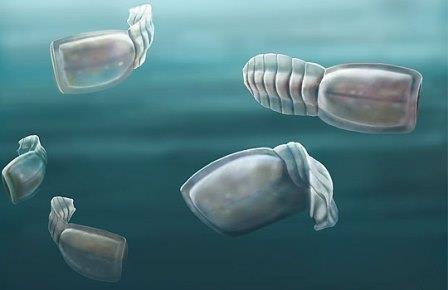 Безглазые пловцы из кембрия стали предками человека