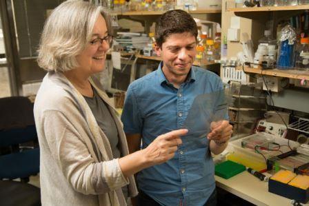 Биохимики нашли «переключатель», обеспечивающий здоровое старение