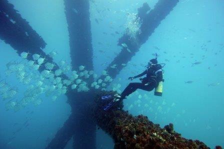 Биологи выяснили, почему рыбы становятся невидимыми в открытом океане