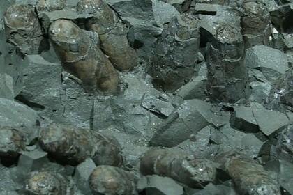 Благодаря форме своих яиц птицы пережили динозавров