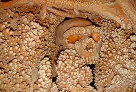 «Человек из альтмауры» оказался неандертальцем