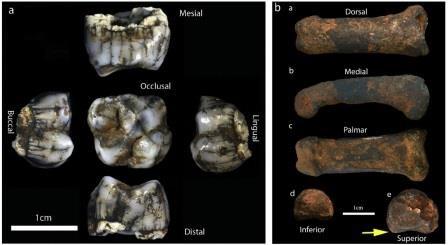 Что творилось в южной африке два миллиона лет назад? новые находки в стеркфонтейне