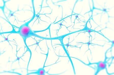 Дендриты важнее для мозга, чем ранее считалось