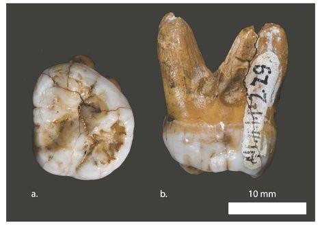 «Денисовцы» жили на алтае больше 100 тысяч лет