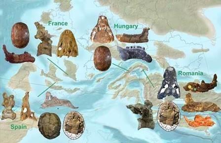Динозавры европы подтвердили версию об астероиде-убийце