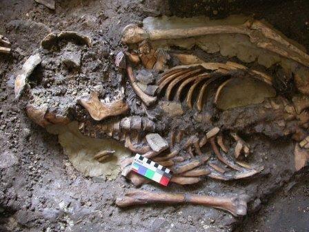 Днк древнего грузина раскрыла тайну первичного заселения европы
