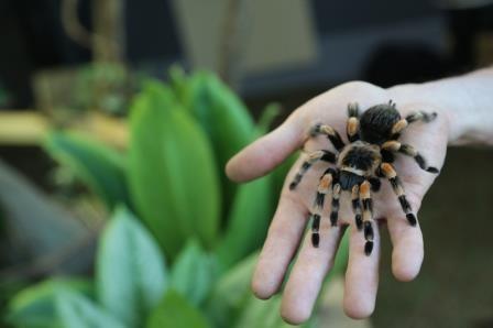 «Дружелюбный паук» помогает преодолеть арахнофобию