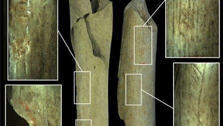 Европейские неандертальцы были каннибалами