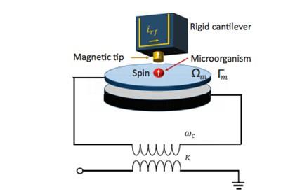 Физики анонсировали создание «микроба шредингера»