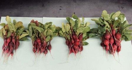 Генетически модифицированные бактерии доставят растениям азот