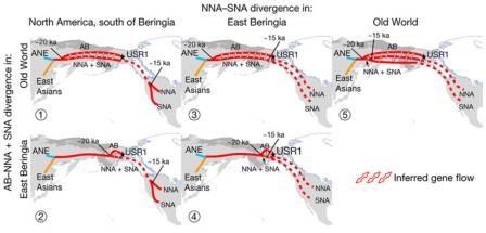 Геном древнего жителя аляски проливает свет на происхождение коренных американцев