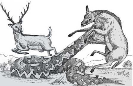 Гигантская гадюка 4 млн. лет назад терроризировала балканы
