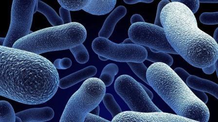 Гигантские бактерии нарушили законы природы