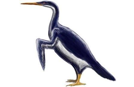 Гигантские пингвины были современниками динозавров