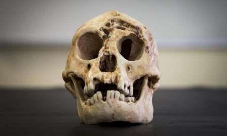 «Хоббиты» с острова флорес могли быть родственниками человека умелого