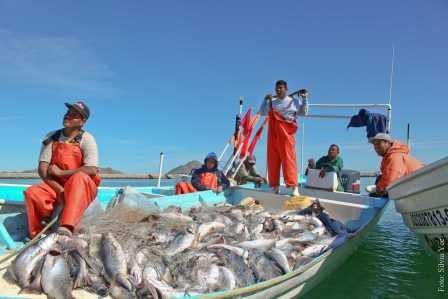 Идущая на нерест рыба издают звуки рекордной громкости