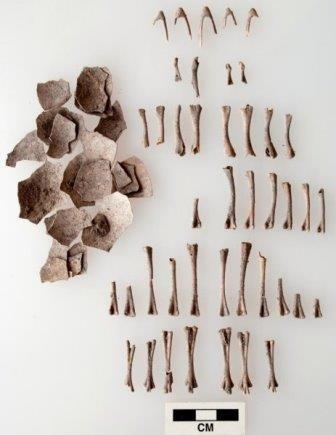 Индейки 1,5 тыс. лет назад и сегодня