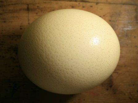 Яйцо страуса помогло установить рекорд древности извлеченных исследователями белковых молекул