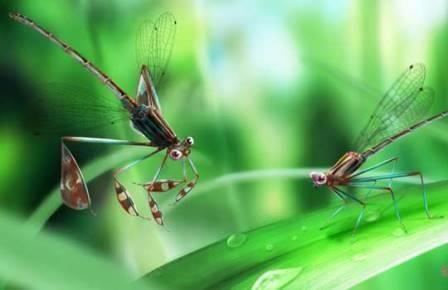 Янтарь сохранил влюбленных стрекоз мелового периода