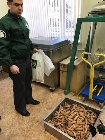 Экологи подарят кремлевской елке новую жизнь