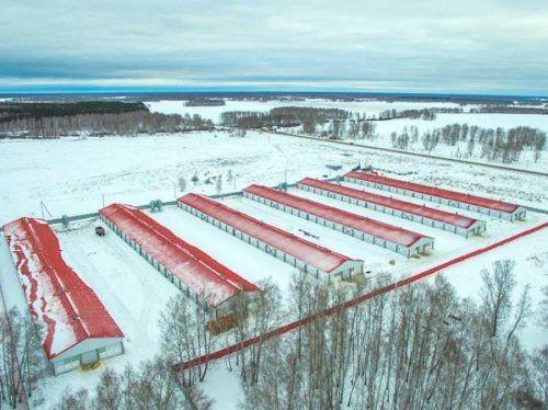 Энергетики подключили к электросетям 2 утиные фермы в красноармейском районе - «новости челябинска»