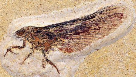 Эволюционный успех насекомым обеспечили крылья