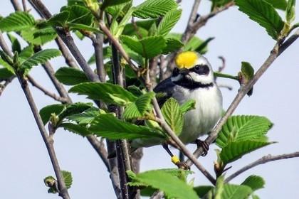 Как птицы предчувствуют природные катаклизмы