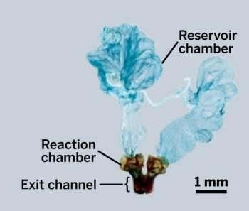 Как работает химическое оружие жука-бомбардира