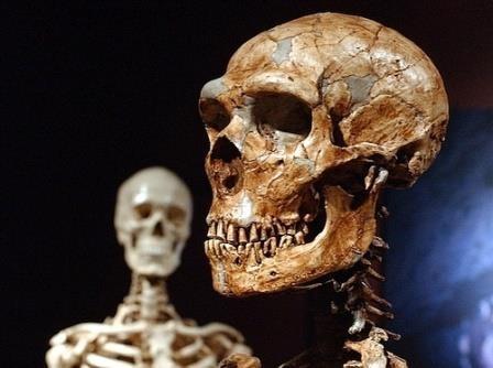 Как собрать неандертальца?
