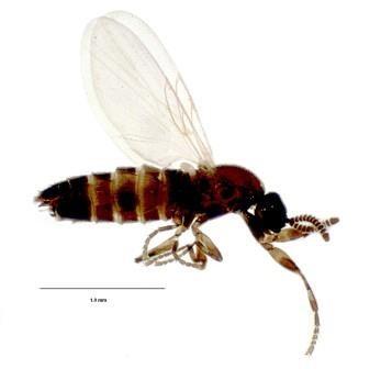 Карельские ученые открыли одиннадцать видов живущих в упавших деревьях насекомых