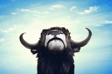 Китайцы вывели гмо коров, устойчивых к бычьему туберкулезу