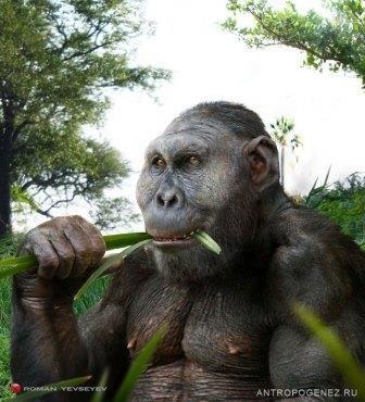 Кому траву, кому крабов: как древние люди делили еду с парантропами