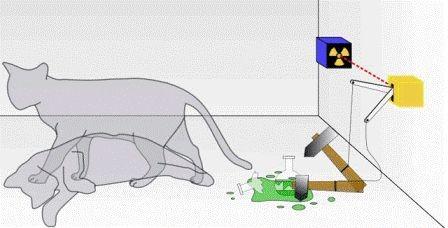 «Кота шрёдингера» убивает гравитация
