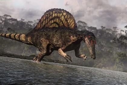 Крупнейший хищный динозавр — плод эволюционного эксперимента