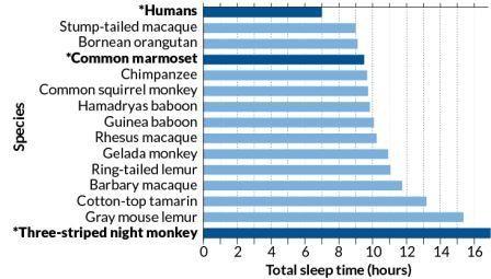 Люди оказались самыми малоспящими из приматов