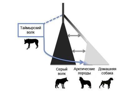 Люди приручили собак еще до ледникового периода