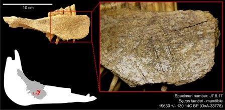 Люди пришли в северную америку 24 тыс. лет назад