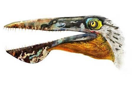 Мезозойского ящера-пеликана назвали в честь дракона с пандоры