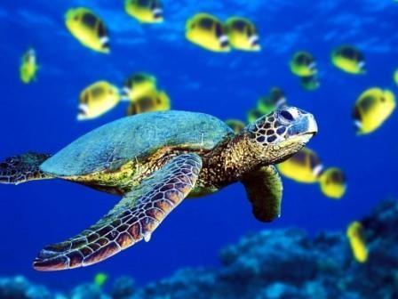 Морские черепахи откладывают яйца, ориентируясь по магнитному полю земли