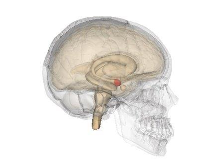 Мозг сам переключает желание и нежелание общаться
