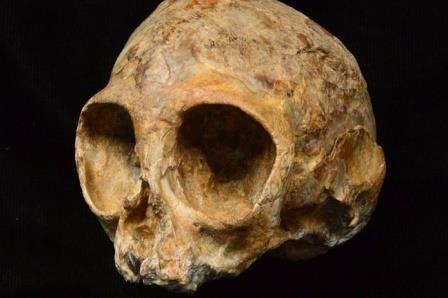 Найден череп древнего «брата» обезьян и человека
