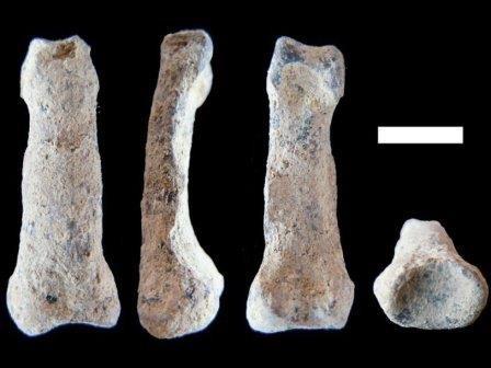 Найдена древнейшая кость предка человека