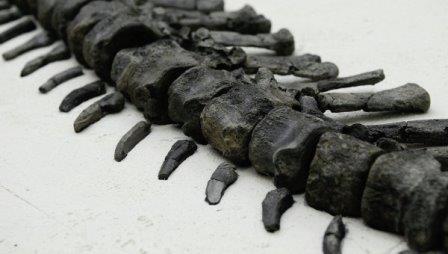 Найденный российскими учеными в сибири динозавр оказался новым видом