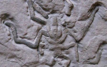 Насекомые появились на земле 480 миллионов лет назад