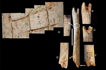 Неандертальцев заподозрили в каннибализме