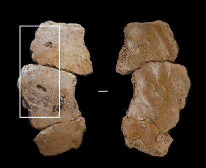 Неандертальцы гибли в когтях хищников