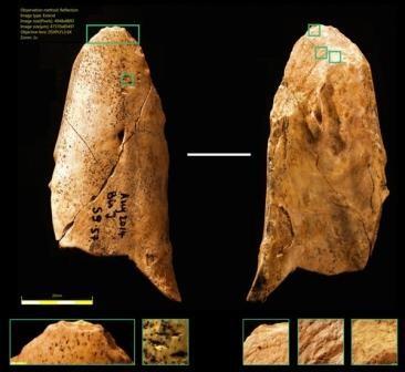 Неандертальцы изготавливали костяные инструменты